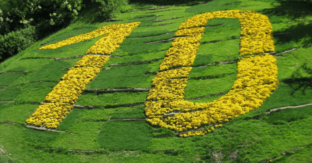 the number ten depicted by yellow flowers in a green field
